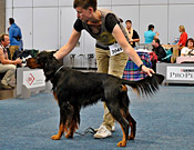 German Winner Show Leipzig 2013